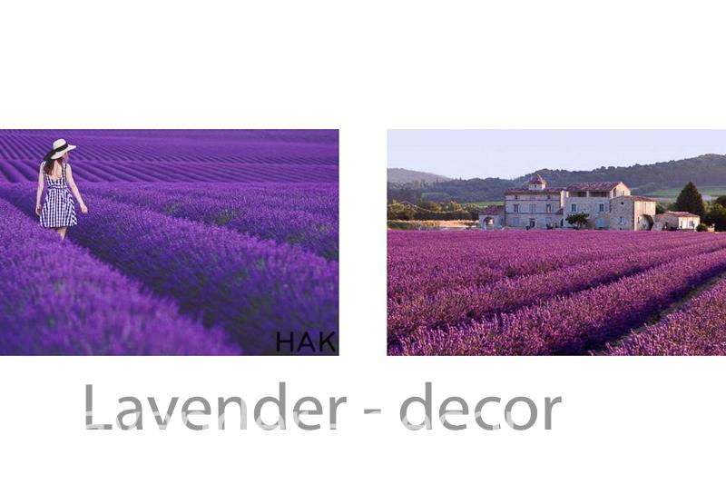 lavender decor1 2 - HOA LAVENDER HAY CÒN GỌI CÁI TÊN KHÁC HOA OẢI HƯƠNG ĐẾN TỪ  PHÁP