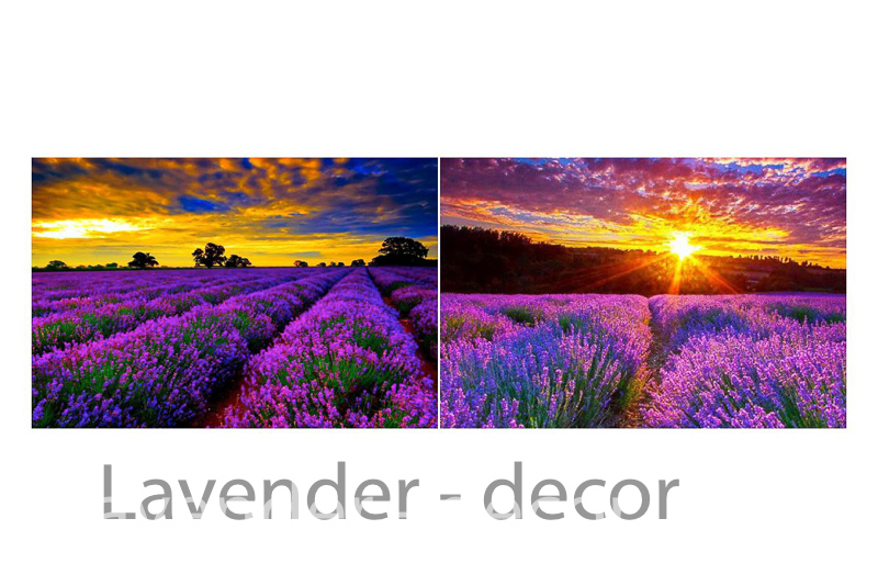 lavneder-decor-hoa lavender-ý nghia hoa lavender