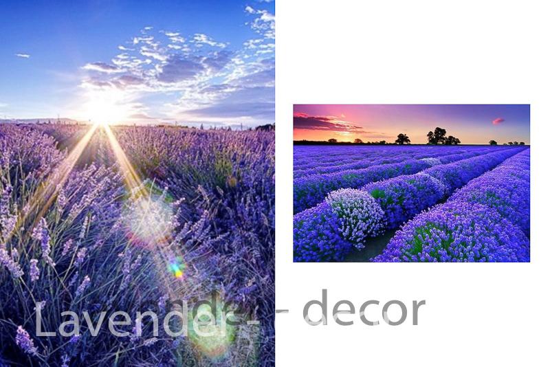 lavender decor3 2 - HOA LAVENDER HAY CÒN GỌI CÁI TÊN KHÁC HOA OẢI HƯƠNG ĐẾN TỪ  PHÁP
